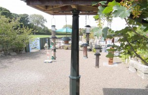 Bird feeding station luxury holiday accommodation in Cornwall