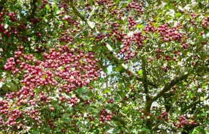 Autumn-Berries luxury holiday accommodation in Cornwall