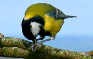 Blue Tit luxury holiday accommodation in Cornwall