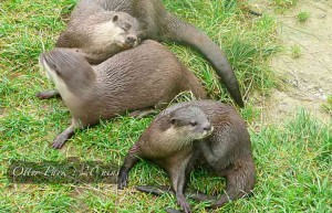 luxury Cornwall self catering Otter Park North Petherwin 20 mins from our luxury Cornwall cottage