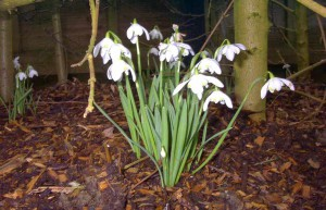 First sign of Spring luxury cottage Cornwall Cornwall Self Catering Luxury