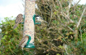 Birds galore luxury cottage Cornwall Cornwall Self Catering Luxury